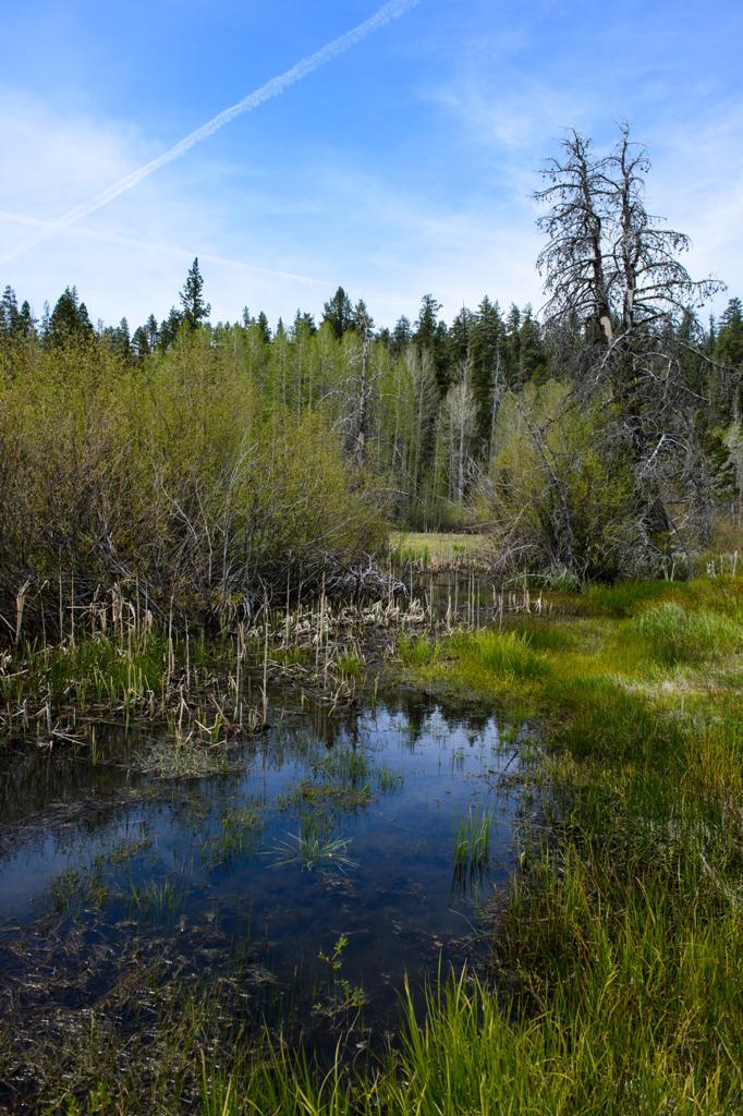 Meadows Bog